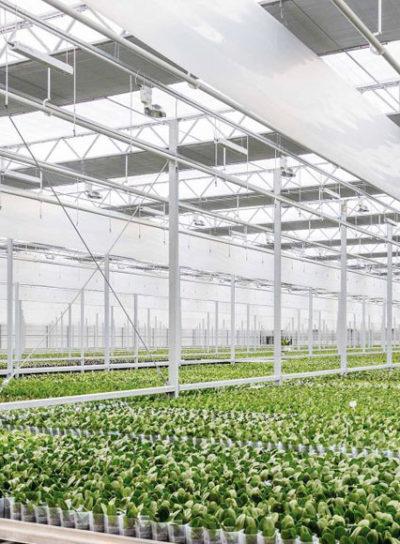 El plastico en la agricultura
